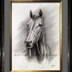 thoroughbred-portrait-main-race-horse-pure-bred-equine-pencil-illustration-peter-jantke-art-studio