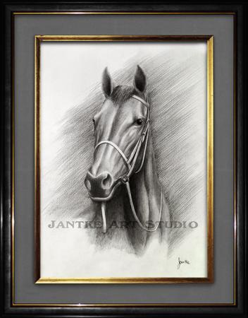 thoroughbred-portrait-main-race-horse-pure-bred-equine-pencil-illustration-peter-jantke-art-studio
