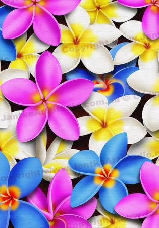 PRC023MC-main-jas-flowers-frangipani-plumeria-madness-colour-jantke-art-print