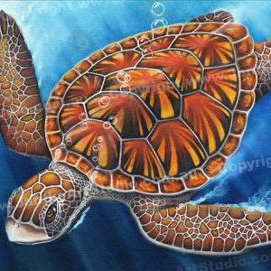 PRC017-main-jas-green-turtle-queensland-australia-jantke-art-print