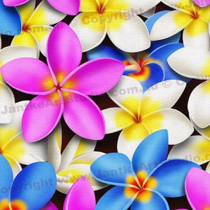 PRC023MC-main-jas-flowers-frangipani-plumeria-madness-colour-jantke-art-print