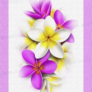 PRC024PK-main-jas-flower-frangipani-plumeria-bouquet-pink-jantke-art-print