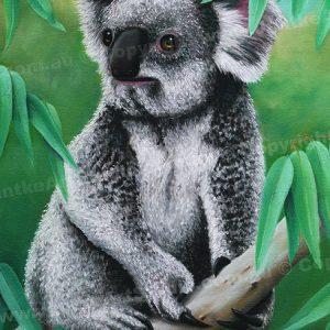 PRC025-main-jas-southern-koala-australian-native-jantke-art-print