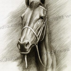 PRC034-main-jas-thoroughbred-portrait-horse-jantke-art-print